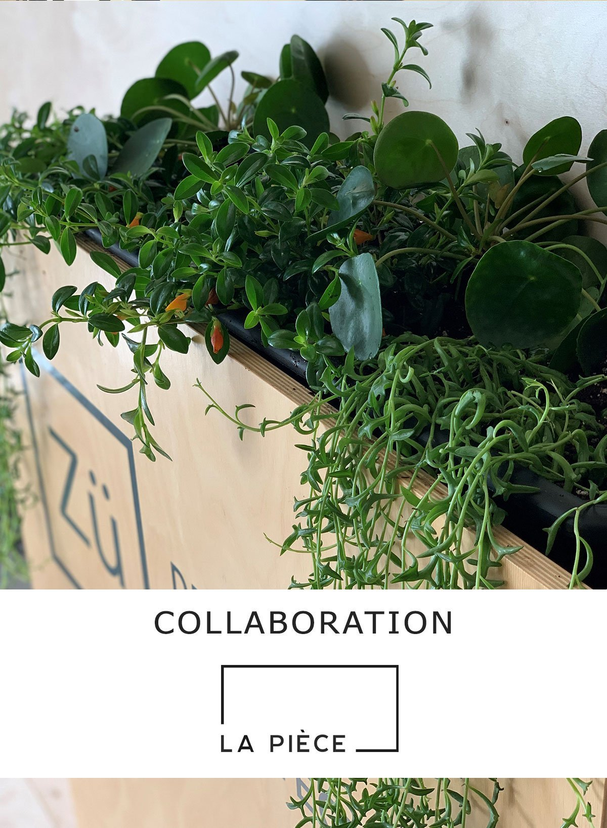 Collaboration-LaPiece-plante-design